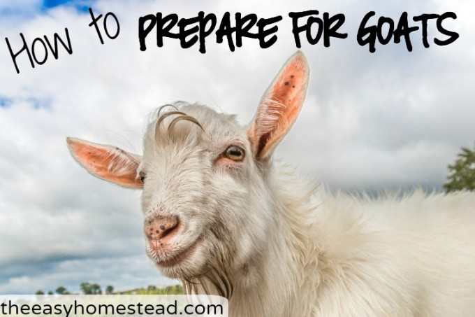 How to Prepare for Goats – The Necessities