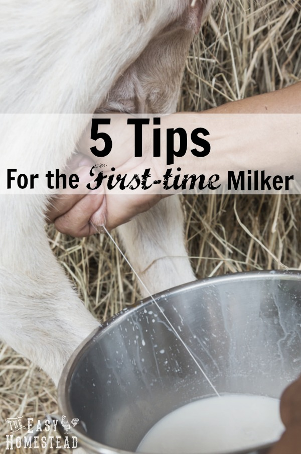 tips for the first-time milker pin